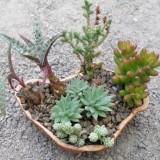 Делаем мини-садик дома или на даче: 27 идей как посадить суккуленты и кактусы