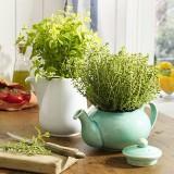 Всегда свежая зелень: Душистые травы у вас дома