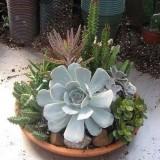 27 идей как посадить суккуленты и кактусы