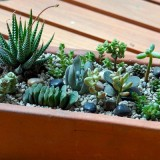 succulent-garden-in-home-and-outdoor2-15