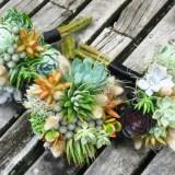 succulent-maids-bq1