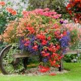 Идеи старины: телеги, тележки и тачки как клумба с цветами и украшение для сада