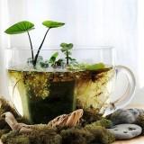 Живая природа своими руками: как сделать мини-прудик дома и на даче в чашке, миске или бочке