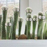 Креатив на подоконнике: Живые кактусы своими руками