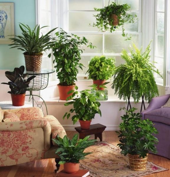 Фото домашних цветов дома