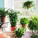 Свой сад дома: Куда поставить комнатные растения: на полу, на стене, на потолке и еще 60 идей