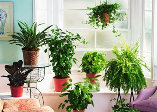 Смотреть комнатные растения фото
