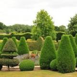 Топиарий в ландшафтном дизайне: фигуры из растений в саду