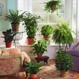 Выбираем комнатные растения в Greensad и смотрим, где их разместить в интерьере