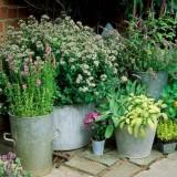 10 идей для контейнерного сада