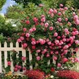 Украшаем дачу: цветы у забора