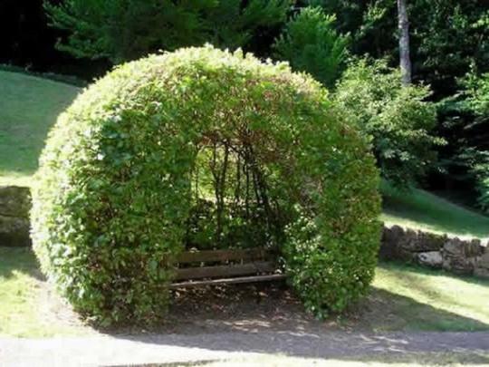 Как сделать беседку из вьющихся растений своими руками