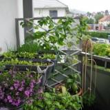 Огород на балконе: идеи для домашней дачи