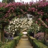 Арки из роз в декоре сада и дачи