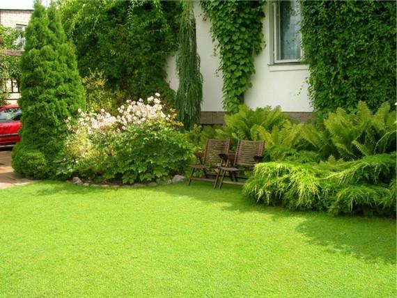 Фото газон своими руками на даче фото 11