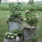 Вторая жизнь бидонов и ведер — для цветов